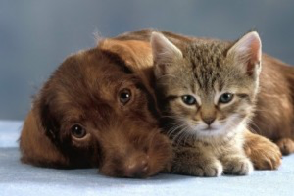 Ein Freund ♫ ein guter Freund ► das ist das Schönste…