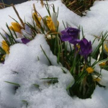 Die Sehnsucht nach Frühling wird zur Gewissheit